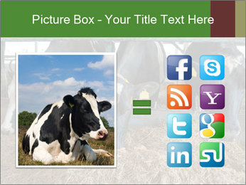Cows feeding PowerPoint Templates - Slide 21