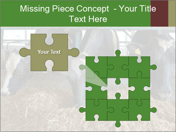 Cows feeding PowerPoint Templates - Slide 45