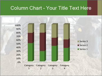 Cows feeding PowerPoint Templates - Slide 50