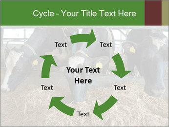 Cows feeding PowerPoint Templates - Slide 62