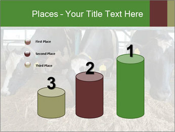 Cows feeding PowerPoint Templates - Slide 65