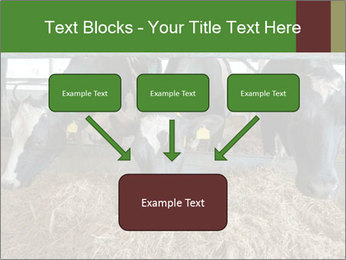 Cows feeding PowerPoint Templates - Slide 70