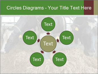 Cows feeding PowerPoint Templates - Slide 78