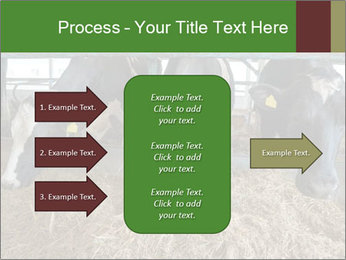Cows feeding PowerPoint Templates - Slide 85