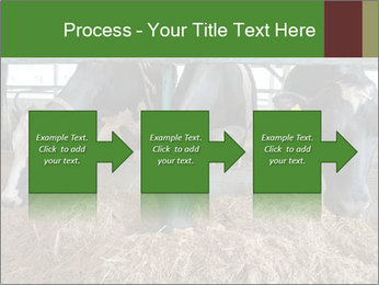 Cows feeding PowerPoint Templates - Slide 88