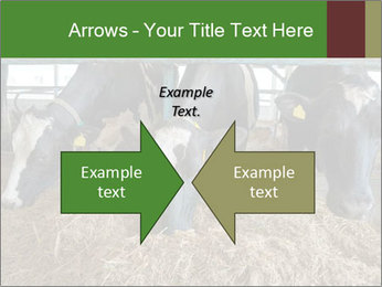 Cows feeding PowerPoint Templates - Slide 90