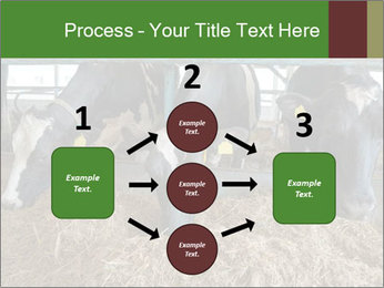 Cows feeding PowerPoint Templates - Slide 92