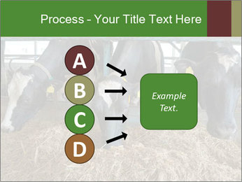 Cows feeding PowerPoint Templates - Slide 94