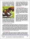 0000088066 Word Template - Page 4