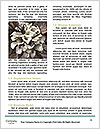 0000088070 Word Templates - Page 4