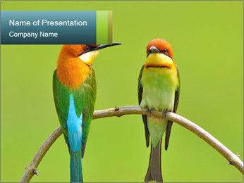 Couple of Bird PowerPoint Template - Slide 1