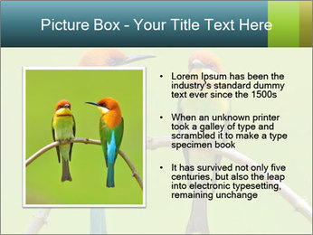 Couple of Bird PowerPoint Template - Slide 13