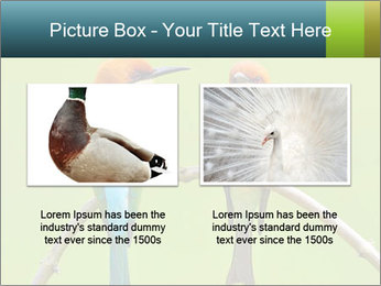 Couple of Bird PowerPoint Template - Slide 18