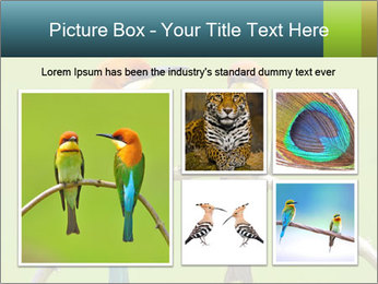 Couple of Bird PowerPoint Template - Slide 19