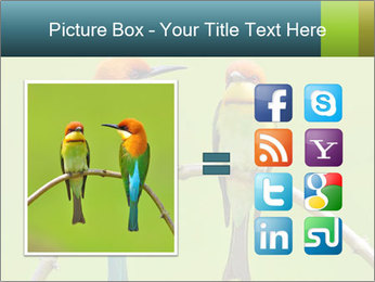 Couple of Bird PowerPoint Template - Slide 21