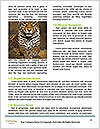 0000088073 Word Templates - Page 4