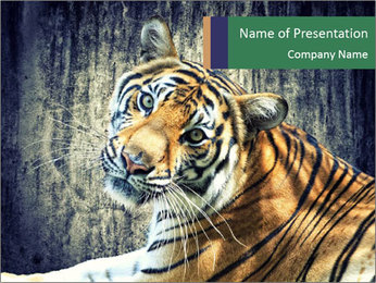 Tiger PowerPoint Templates - Slide 1