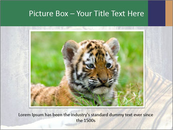 Tiger PowerPoint Templates - Slide 15