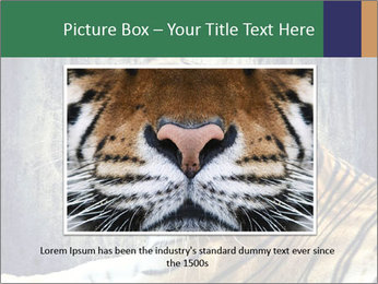 Tiger PowerPoint Templates - Slide 16