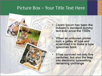 Tiger PowerPoint Templates - Slide 17