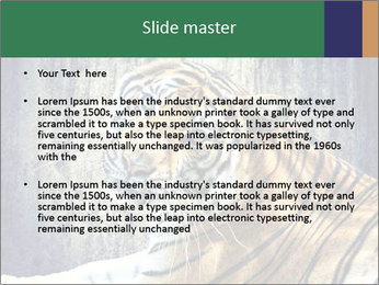 Tiger PowerPoint Templates - Slide 2