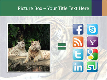 Tiger PowerPoint Templates - Slide 21