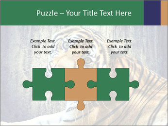 Tiger PowerPoint Templates - Slide 42
