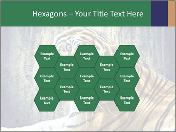 Tiger PowerPoint Templates - Slide 44