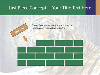 Tiger PowerPoint Templates - Slide 46