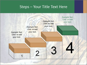 Tiger PowerPoint Templates - Slide 64