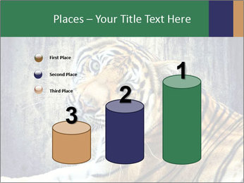 Tiger PowerPoint Templates - Slide 65