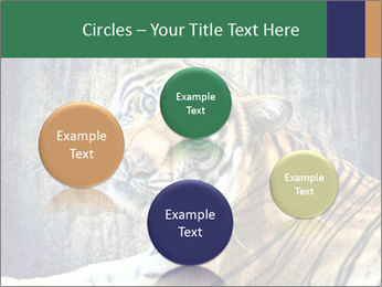 Tiger PowerPoint Templates - Slide 77