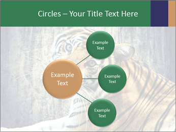 Tiger PowerPoint Templates - Slide 79