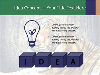 Tiger PowerPoint Templates - Slide 80