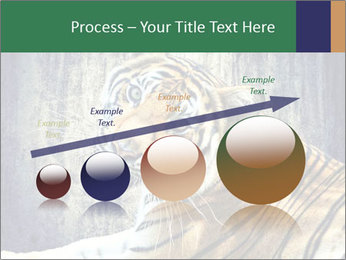 Tiger PowerPoint Templates - Slide 87
