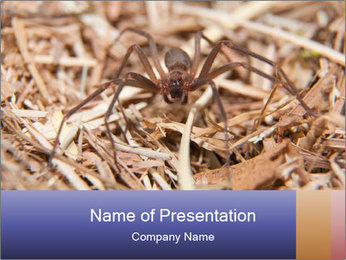 Brown Recluse PowerPoint Template - Slide 1