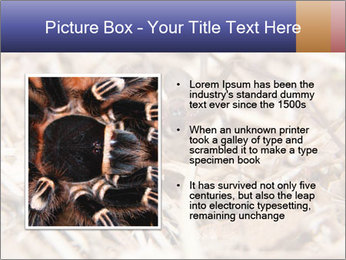 Brown Recluse PowerPoint Template - Slide 13