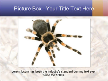Brown Recluse PowerPoint Template - Slide 16