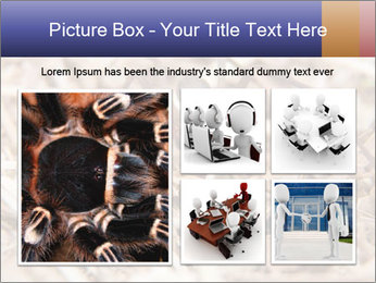 Brown Recluse PowerPoint Template - Slide 19
