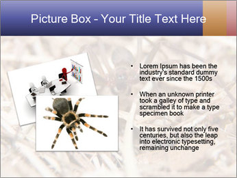 Brown Recluse PowerPoint Template - Slide 20