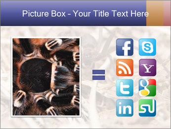 Brown Recluse PowerPoint Template - Slide 21