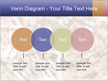 Brown Recluse PowerPoint Template - Slide 32
