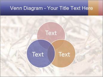 Brown Recluse PowerPoint Template - Slide 33