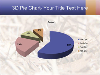 Brown Recluse PowerPoint Template - Slide 35