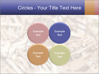 Brown Recluse PowerPoint Template - Slide 38