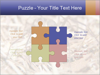 Brown Recluse PowerPoint Template - Slide 43