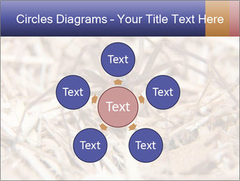 Brown Recluse PowerPoint Template - Slide 78