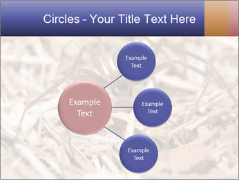 Brown Recluse PowerPoint Template - Slide 79