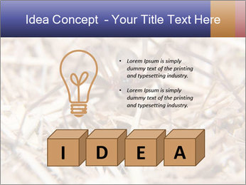 Brown Recluse PowerPoint Template - Slide 80