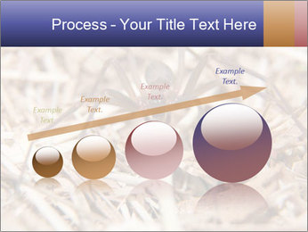 Brown Recluse PowerPoint Template - Slide 87